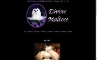 Divine Maltese