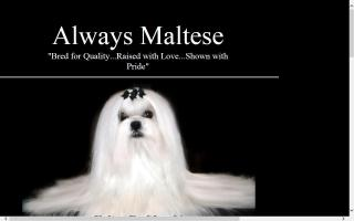Always Maltese