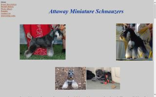Attaway Miniature Schnauzers