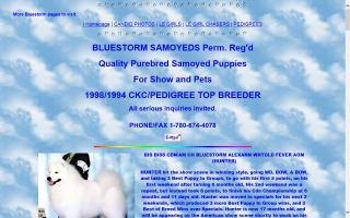 Bluestorm Samoyeds