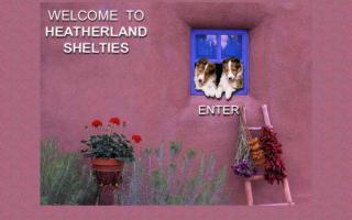 Heatherland Shetland Sheepdogs