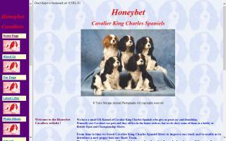 Honeybet Cavalier King Charles Spaniels