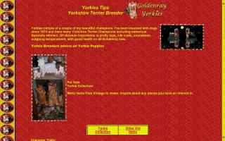 Goldenray Yorkies