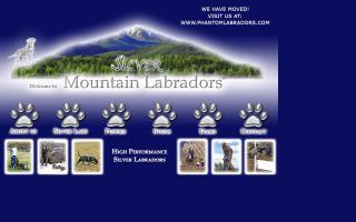 Silver Mountain Labradors