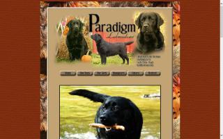 Paradigm Labradors