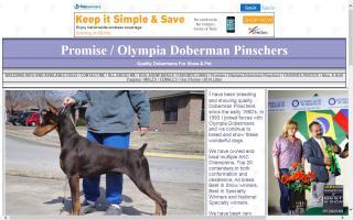 Promise / Olympia Doberman Pinschers