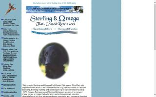 Sterling and Omega Flat-Coated Retrievers