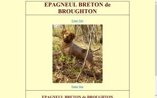 Epagneul Breton de Broughton