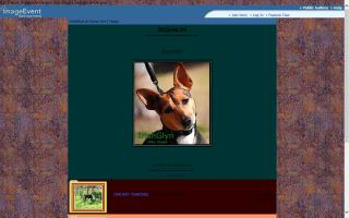 IrishGlyn Rat Terriers