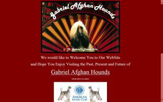 Gabriel Afghan Hounds