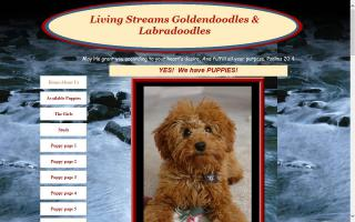 Living Streams Goldendoodles