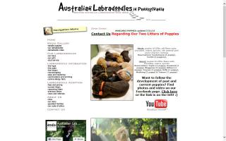 Australian Labradoodles in Pennsylvania