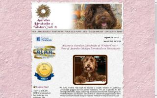 Australian Labradoodles of Windsor Creek
