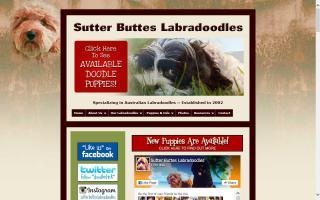 Sutter Buttes Labradoodles & Goldendoodles