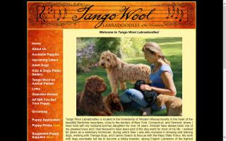 Tango Wool Labradoodles