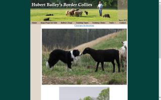 Hubert Bailey's Border Collies