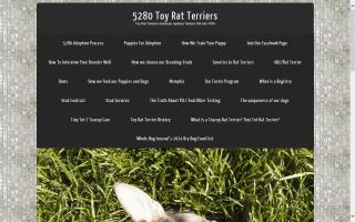 5280 Toy Rat Terriers