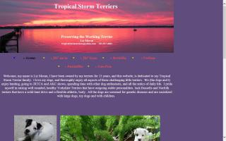Tropical Storm Terriers