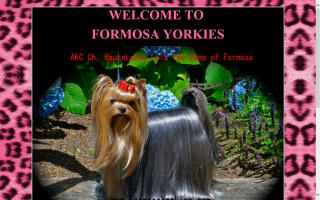Formosa Yorkshire Terriers