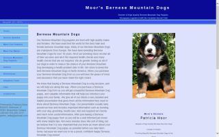 SwissRidge Bernese Mountain Dogs