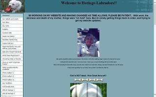 Heringo Labradors