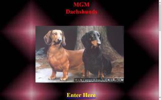 MGM Dachshunds