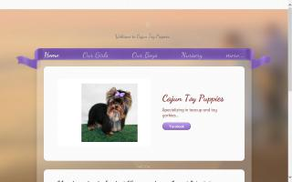 Cajun Toy Puppies
