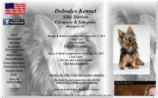 Dobralco Silky Terriers