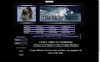 Cespa Tibetan Terriers