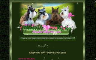 Paradise Valley Miniature Schnauzers