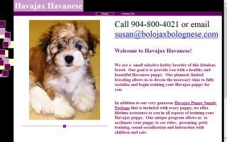 Havajax Havanese
