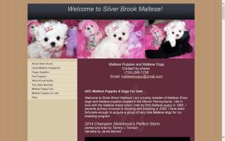 Silver Brook Maltese