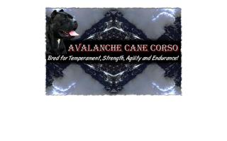 Avalanche Cane Corso
