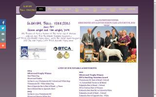 Glentom Bull Terriers