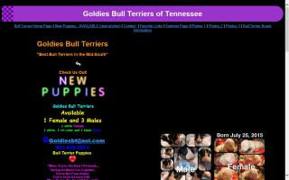 Goldies Bull Terriers of Tennessee