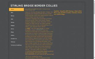 Stirling Bridge Border Collies