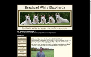 Braehead White Shepherds