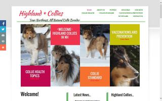 Highland Collies