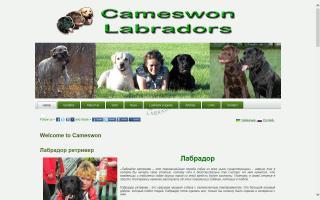 Cameswon Labradors