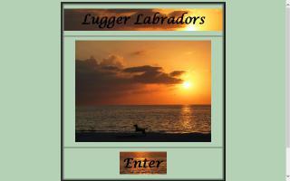 Lugger Labradors