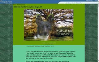 Wild Oak Rat Terriers