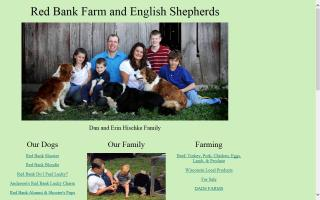 Red Bank English Shepherds