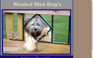 Wanted Nice Dogs