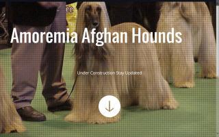 Amoremia Afghan Hounds
