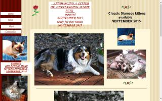 Desert Rose Australian Shepherds