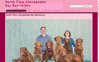 North Flow Chesapeake Bay Retrievers