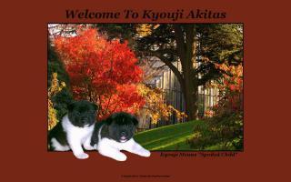 Kyouji Akitas