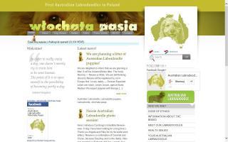 Wlochata Pasja Australian Labradoodles