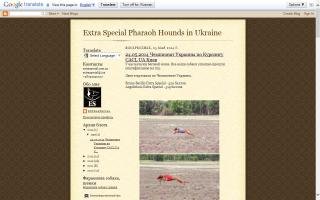 Extra Special Pharaoh Hounds in Ukraine
