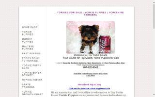 Yorkie Puppies - Parti Yorkies